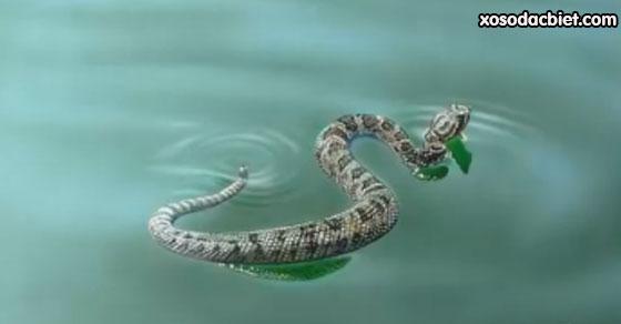 Giải mã giấc mơ thấy rắn bơi trong nước là điềm gì, tốt hay xấu?